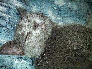 Sweet Minion